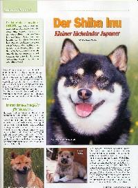 http://shiba-inu-von-der-honigsburg.de/shiba/bilder/dh.jpg